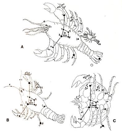 CrabStahl