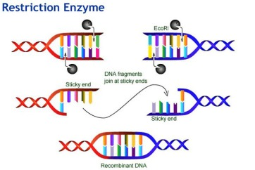 Recombinant-DNA